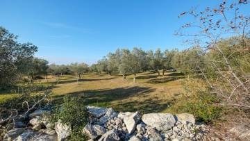 Farm land for sale Bale